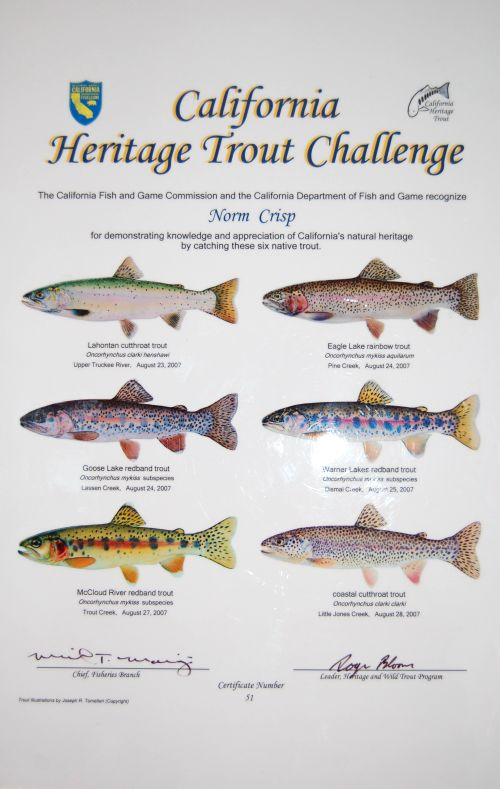 California heritage trout challenge certificate fish for Trout fishing southern california