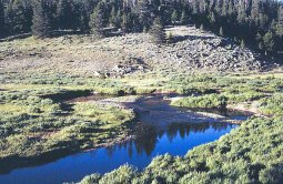 Fly fishing in Wyoming's Hog Park Creek with Stream Side Adventures