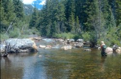 Fly fishing in Wyoming's French Creek with Stream Side Adventures
